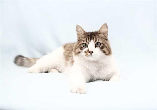 Отдам даром: Красивый котик Тоша в добрые руки