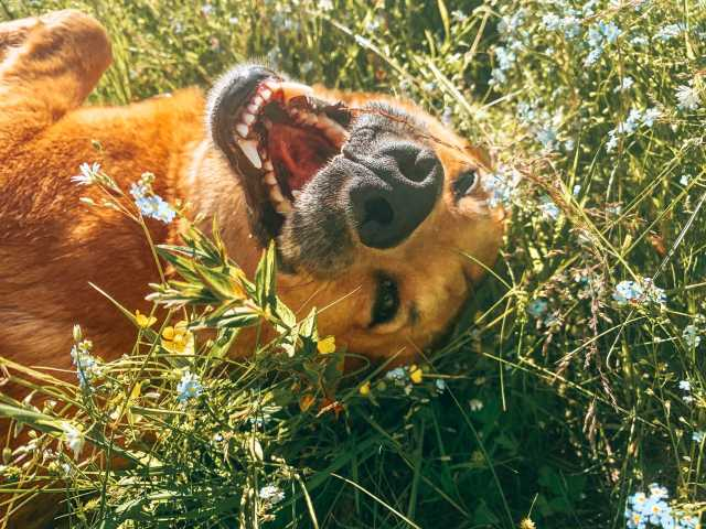 Отдам даром: Самый лучший пёс Джек ищет своего челове