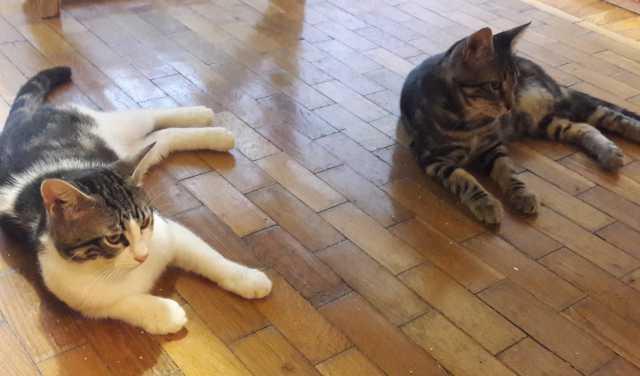 Отдам даром: котики