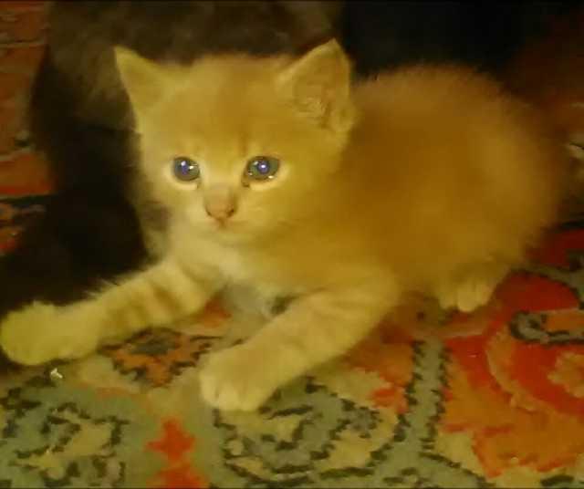 Отдам даром: котят в добрые руки 2 мальчика 1 м