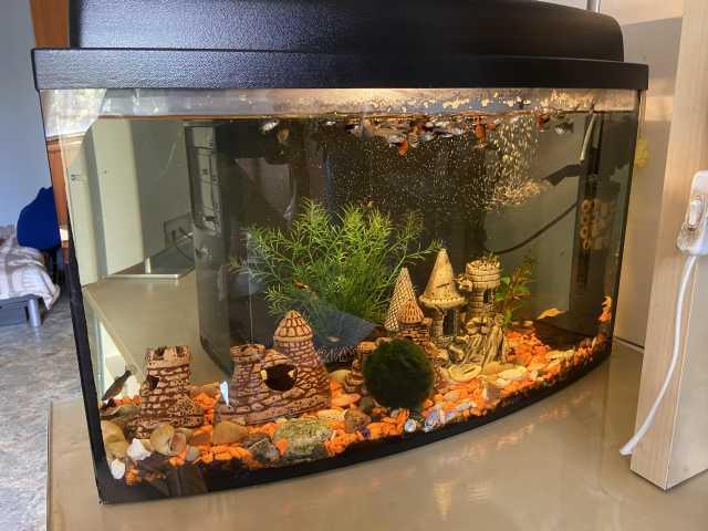 Продам: Аквариум с рыбками