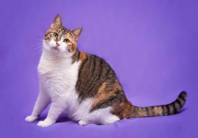 Отдам даром: Молодая кошечка Стефа в дар