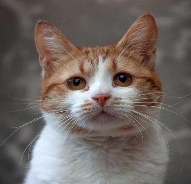 Отдам даром: Маленькая кошечка Трейси ищет дом