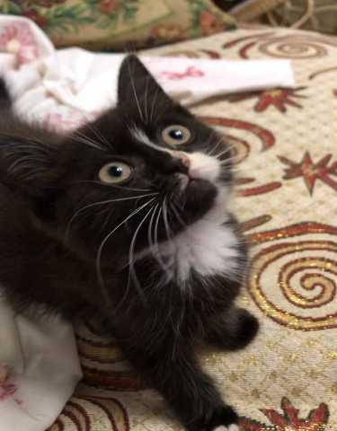 Отдам даром: Котенок
