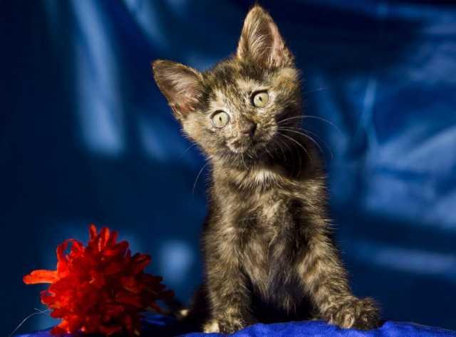 Отдам даром: Ищут дом замечательные котята