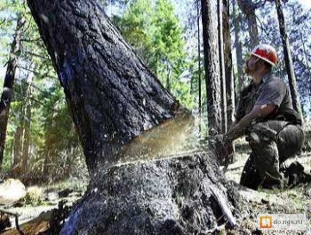 Предложение: спил деревьев любой сложности