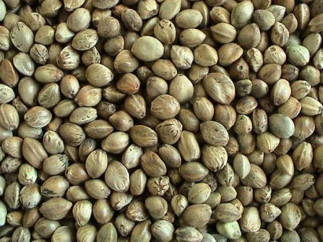 Продам: Семена Конопли Пищевой, чистые, отборные