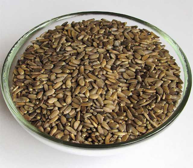 Продам: Семена Расторопши, чистые, отборные