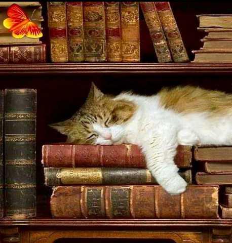 Куплю: Книги
