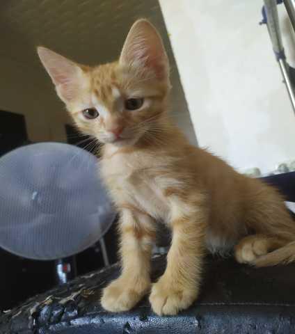 Отдам даром: Милых котяток)