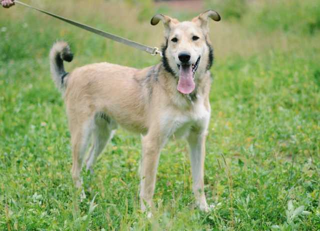 Отдам даром: Мудрый пёс Йода