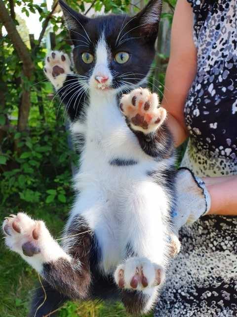 Отдам даром: Ищет дом котик