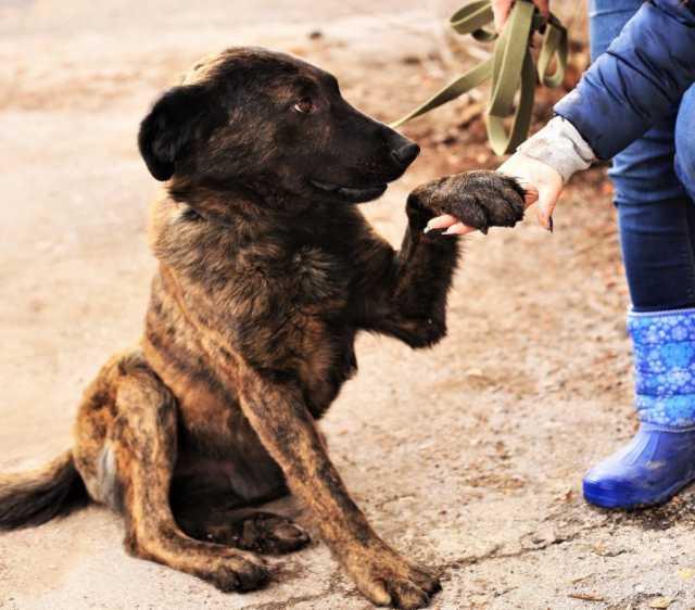 Отдам даром: Собака из приюта в добрые руки