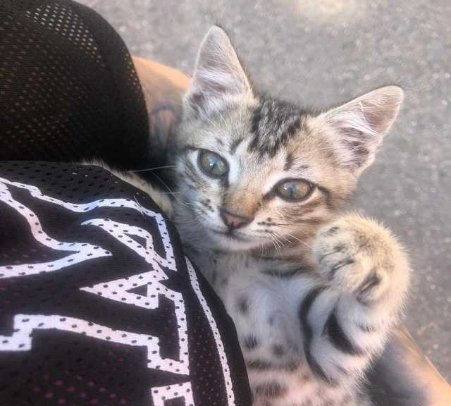 Отдам даром: Котенок Марат