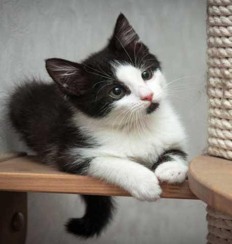 Отдам даром: Малюсенькая кошечка в поисках дома!