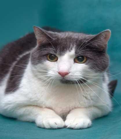 Отдам даром: Чудесный котик Оливер в поисках дома!