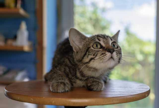 Отдам даром котенка Шерлока
