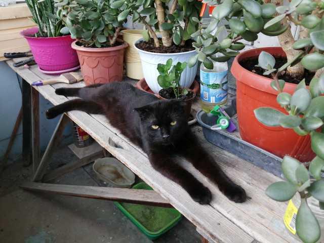 Отдам даром: прекрасного кота Филимона