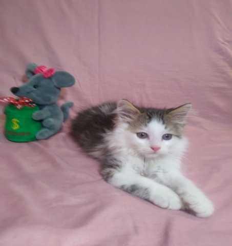 Отдам даром: Милые котята ищут дом!