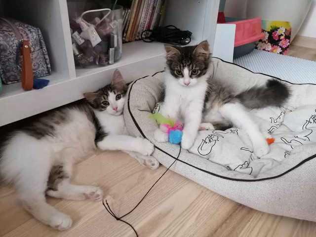 Отдам даром: Двойная доза кошачьего счастья