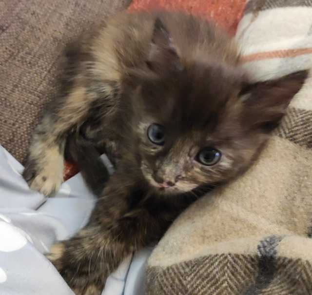 Отдам даром: Котёнка
