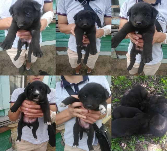Отдам даром: Очаровательные щенки