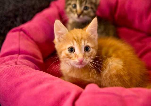 Отдам даром Плюшевые котята в добрые руки!