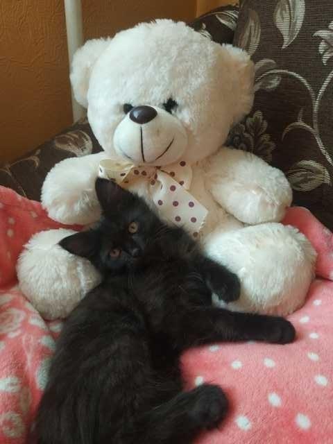 Отдам даром: Отдам котенка в заботливые руки