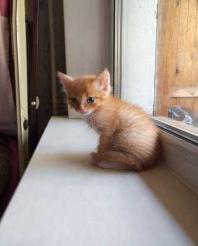Отдам даром: Возьмите котёнка?