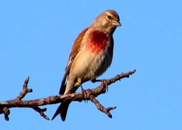 Продам: Лесные птицы