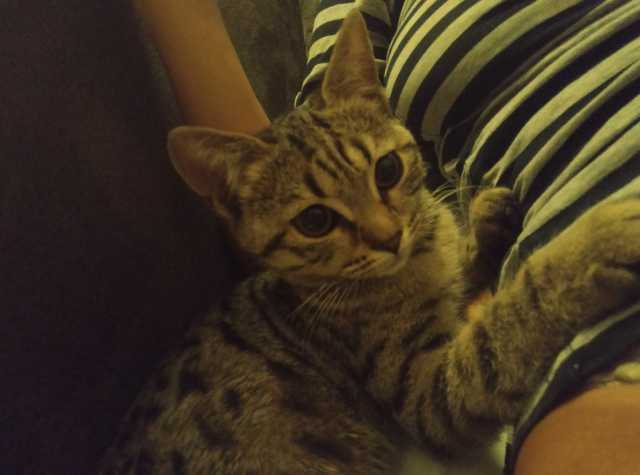 Отдам даром: котенка в добрые руки