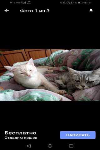 Отдам даром: Котята по пол годика