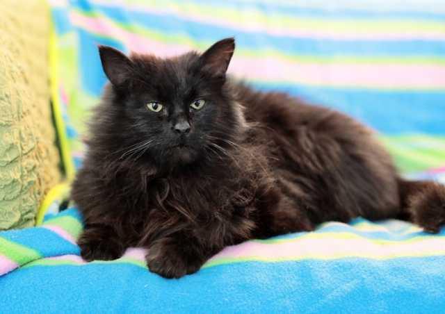 Отдам даром: Бесконечно добрая замечательная кошка Бр