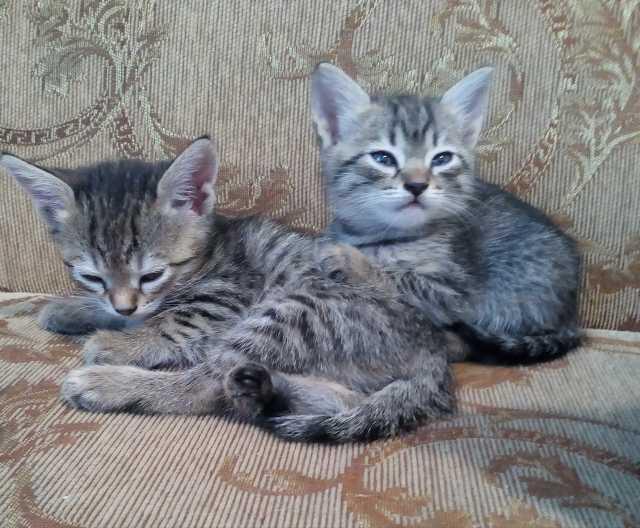 Отдам даром: красивых котят