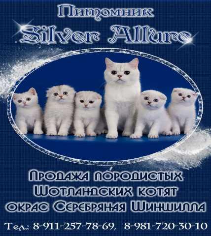Продам: Шотландские котята из питомника