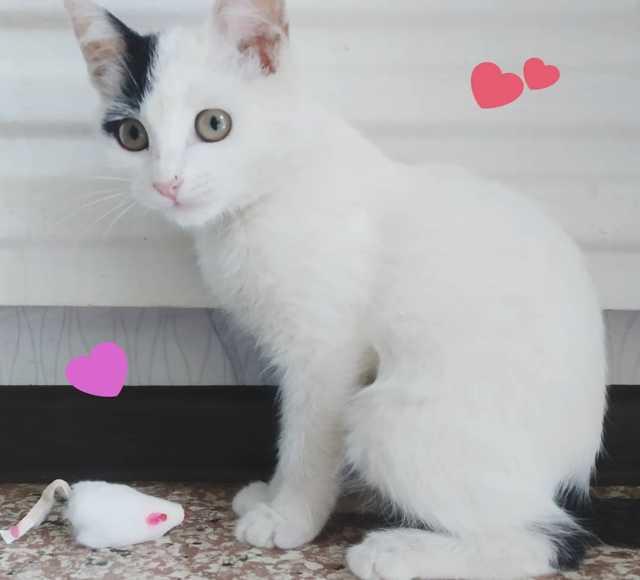 Отдам даром: Кошечка 3 месяца
