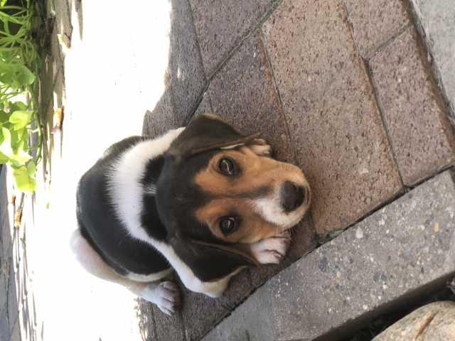 Отдам даром: щенок