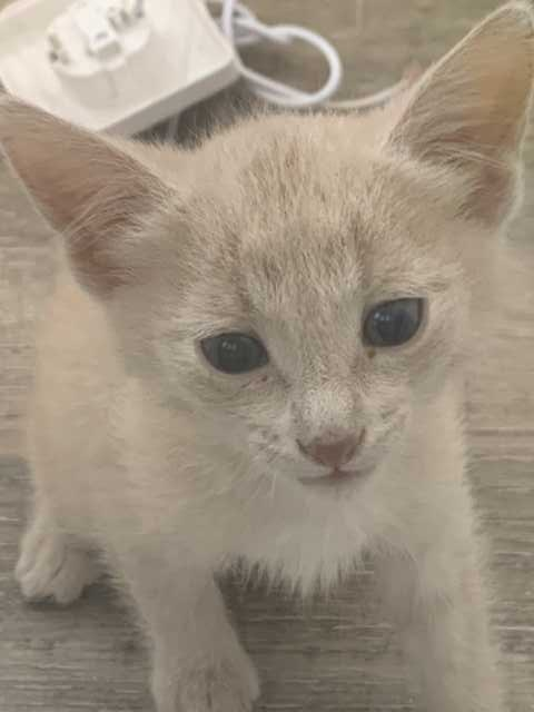 Отдам даром: Котёнок