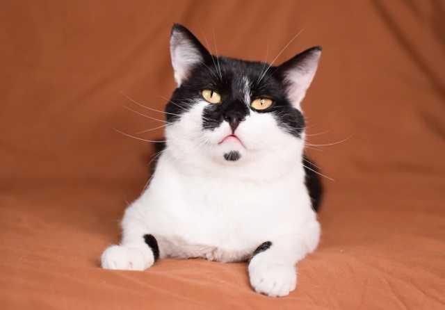 Отдам даром: Тима - мягкие лапки, котик в хорошие рук
