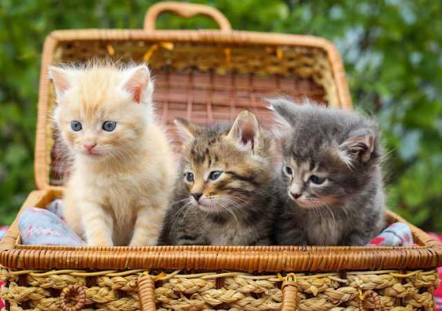 Отдам даром Великолепные котята в дар