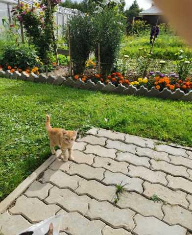Продам: Срочно котята