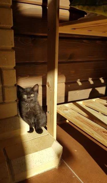 Отдам даром: Котёнок в добрые руки