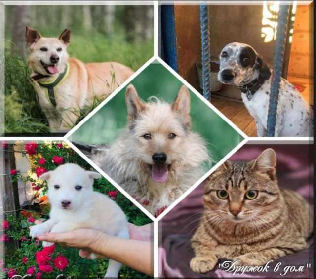Отдам даром: Домашние животные из приюта в дом