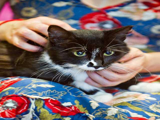 Отдам даром: Маруся, молодая маркизная кошечка в дар