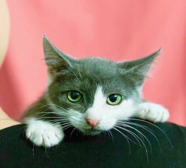 Отдам даром: Котенок Мушка ищет дом