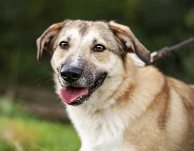 Отдам даром Филимон — дружелюбный пес в добрые руки!