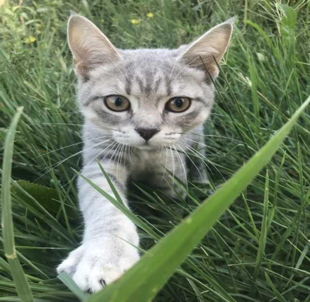 Отдам даром: Отдам котёнка (девочка) в добрые руки