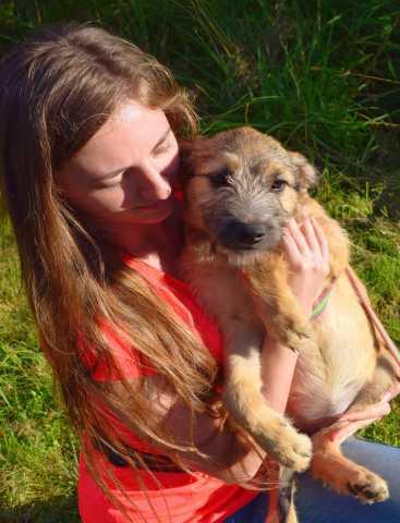 Отдам даром: щеночка, 3 месяца