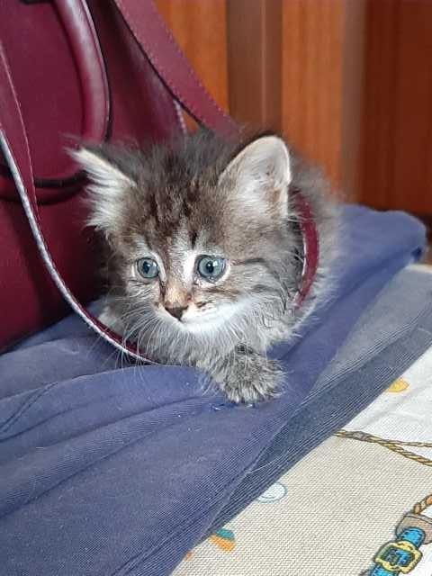 Отдам даром: котенка