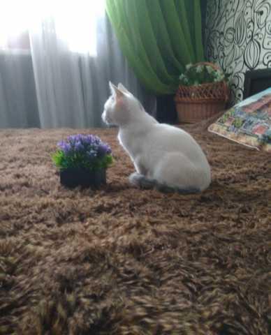 Отдам даром: Отдам в хорошие руки котенка